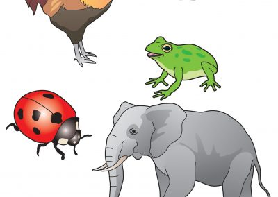 Vector Animals 1